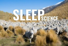 The Science Of Sleep For Athletes